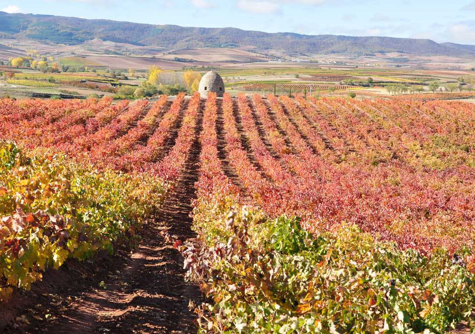 vinos otoño